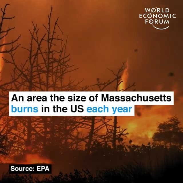 美国每年山火肆虐的区域相当于马塞诸塞州的面积