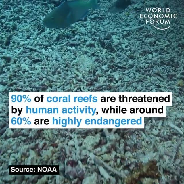 90%的珊瑚礁已经受到人类活动的威胁,60%已经极度濒危