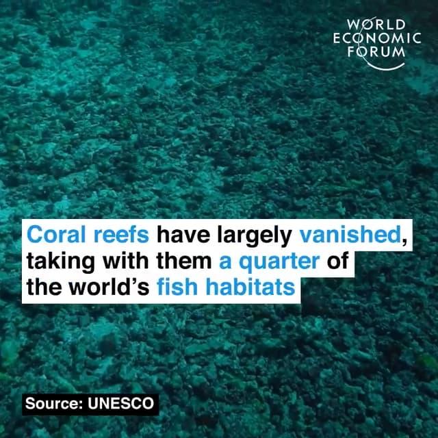 大部分珊瑚礁已经不见踪迹,一起消失的还有全球四分之一的鱼类栖息地
