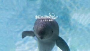 International Freshwater Dolphin Day