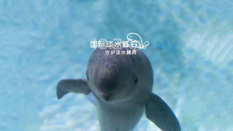International Freshwater Dolphin Day