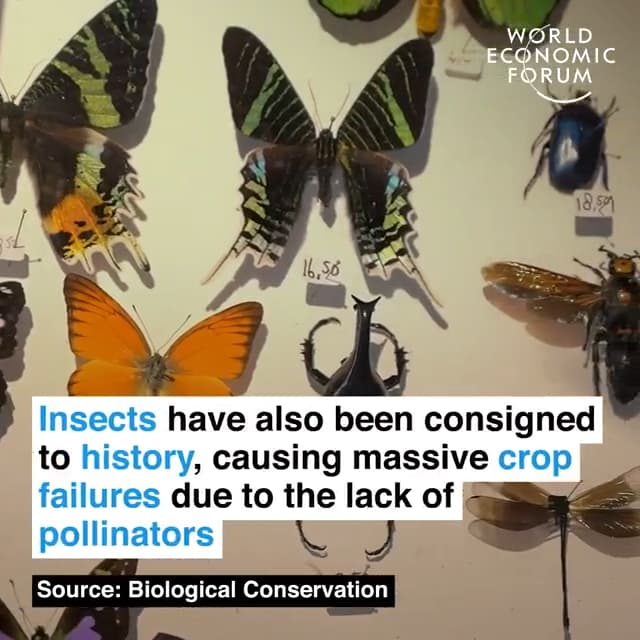 昆虫也都成为了历史,由于缺少传粉昆虫,粮食大幅欠收