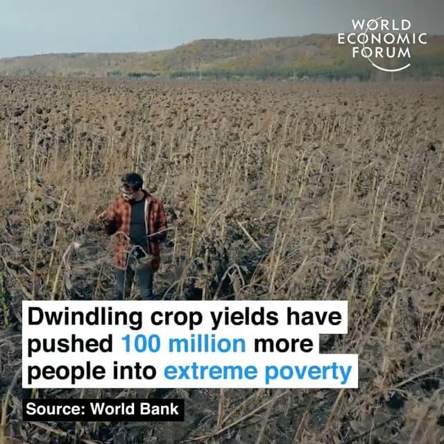 粮食减产将使额外的的1亿人口陷入极度贫困